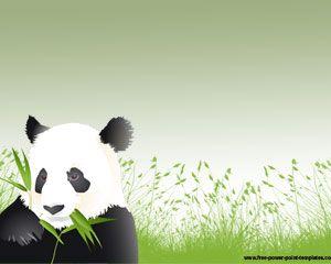 Panda Powerpoint Szablony