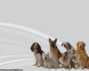 Dog Breeds Powerpoint