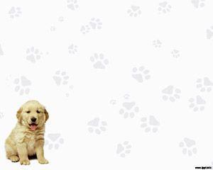 Labrador Retriever Powerpoint PPT Template