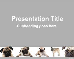 Plantilla PowerPoint de Perro Pug PPT Template