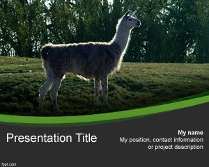 Andean Animal Powerpoint Template