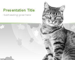 Domestic Cats PowerPoint Template with awesome gray cat in the slide design