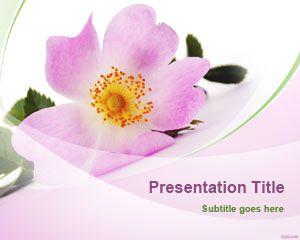 Single Flower PowerPoint Template
