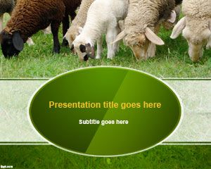 Sheep Wool PowerPoint Template PPT Template