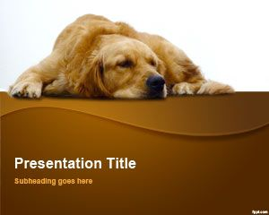 Simple free powerpoint templates golden retriever as a pet make a presentation to write down details regarding how to take proper care of it this breed of dog is usually the first toneelgroepblik Gallery