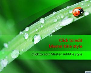 ladybug-powerpoint-template