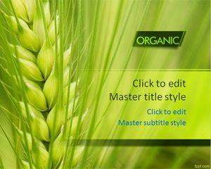 Organic Wheat PPT Template
